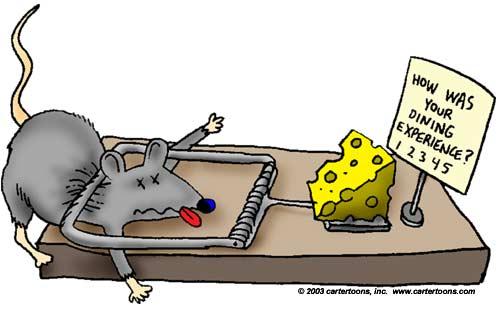 پنیر مفت رو تو تله موش میشه پیدا کرد